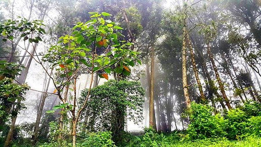 Green of jungle Agushariantophotography Green Jungle Forest Pureair Livingthedream