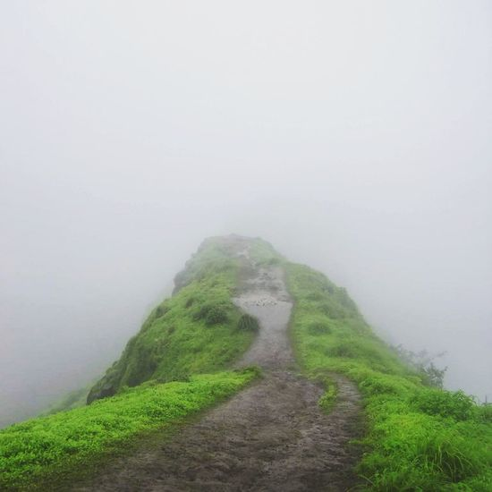 Pathway To Heaven Misty Morning Greenery