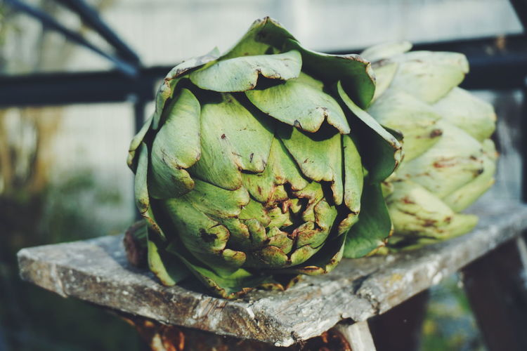 Close-up of artichokes on bench