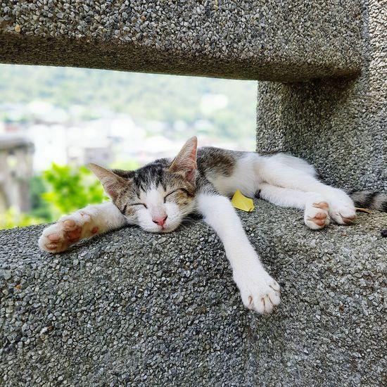 kitty Relaxing First Eyeem Photo