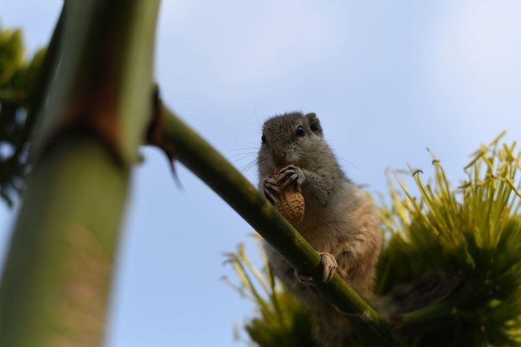 Low angle view of a squirrel on tree