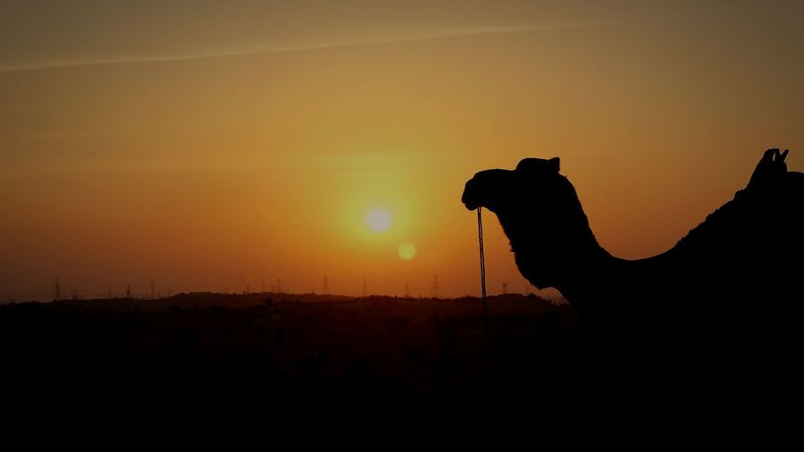 Silhouette of horse in ranch against orange sky