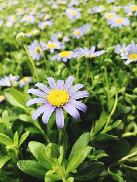 Flowers Flowering Plant Flower Plant Growth Freshness Beauty In Nature Close-up Focus On Foreground Nature