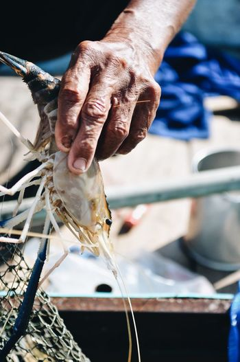 Only Men River Shrimps Human Hand Hand One Person Real People Human Body Part Focus On Foreground Day Holding Men Outdoors Midsection Fishing Industry Working Close-up Finger