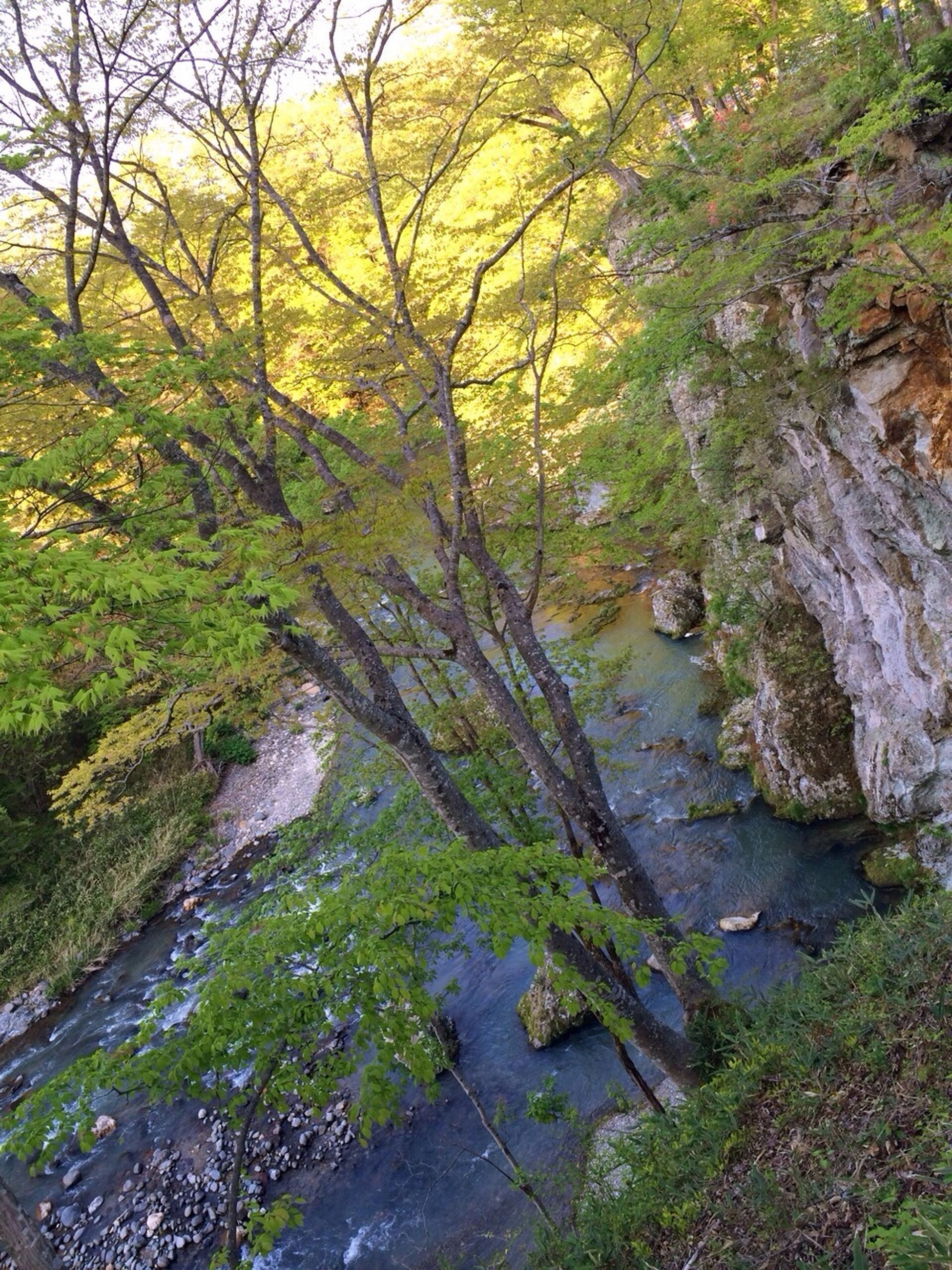 tree, water, tranquility, nature, tranquil scene, beauty in nature, scenics, stream, growth, rock - object, forest, branch, river, plant, non-urban scene, green color, outdoors, day, no people, idyllic