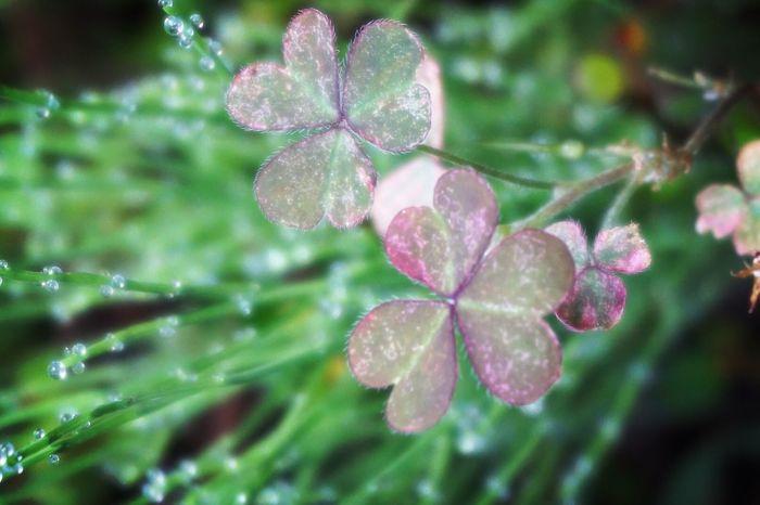 朝露 Nature On Your Doorstep Morning Dew EyeEm Nature Lover My World Leaves Nature_collection 気持ちのいい朝に ..