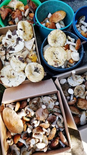 High angle view of mushrooms in bowl on table