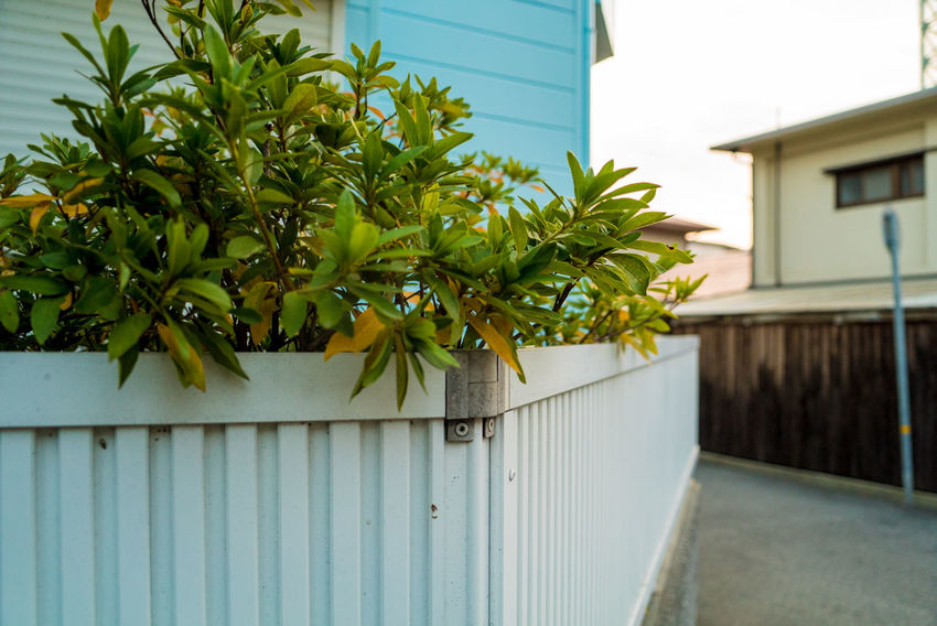 Streetphotography Street EyeEmNewHere Built Structure Plant Building Exterior Architecture Building Growth Green Color Day Nature No People Leaf House Focus On Foreground Plant Part Outdoors Wall - Building Feature Close-up Fence Boundary Front Or Back Yard Iron Morning