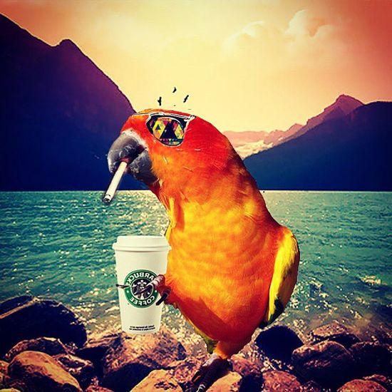 Birds now a days 🐦 Sunconure Chilling Landscape Hipsterbird Putabirdonit Portlandiaeverywhere ShitHappens Conureplease Indie Alternative Urban Starbucks Coffee Cigarette  Smoker Serene Mellow Graphicskills Edit
