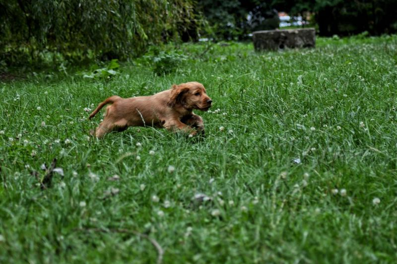 Dog Grass One