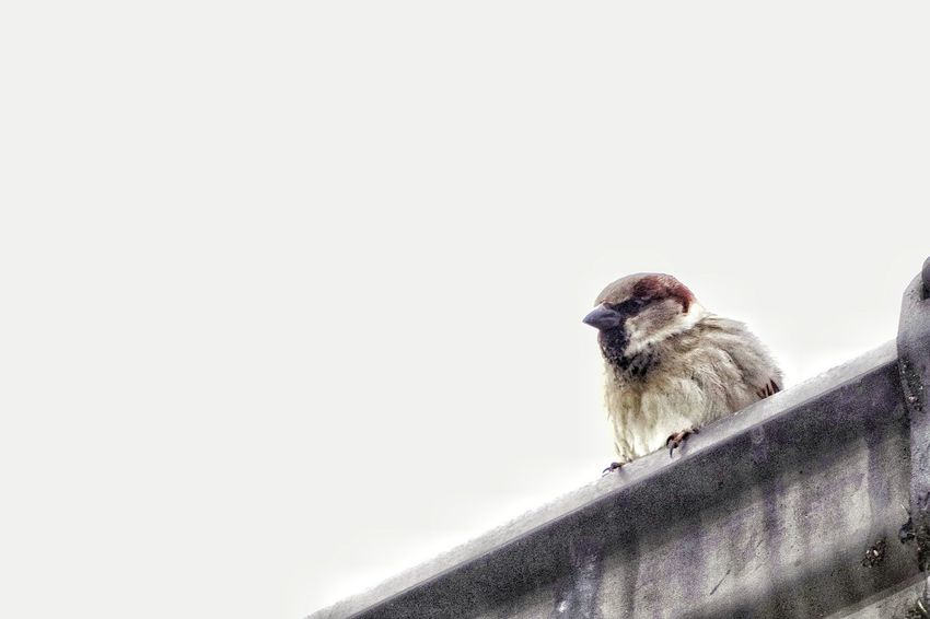 Animal Themes One Animal Bird Animal Wildlife No People Animals In The Wild Nature Close-up Day Indoors  Sparrow Beauty In Nature Nature Outdoors Fragility EyeEm Nature Lover I Love Nature Birds Of EyeEm