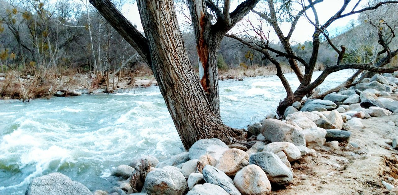 Kern River. Tree Nature Tree Trunk Beauty In Nature Tranquility Scenics Outdoors Day Water Sea Beach Branch No People Cold Temperature Snow Sky Cold river