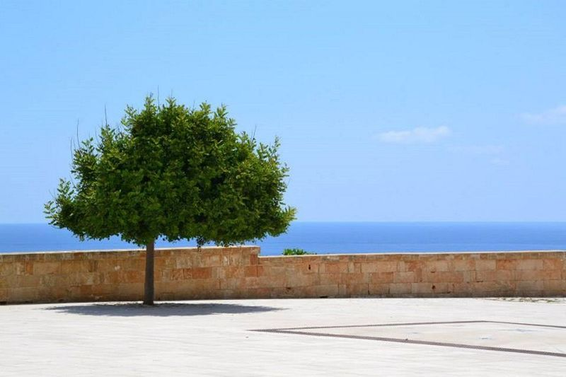 Salento Leuca Puglia Tree Sea Nature Outdoors Beach Travel Destinations No People Tranquility Horizon Over Water Day Scenics Water Landscape Beauty In Nature Sky