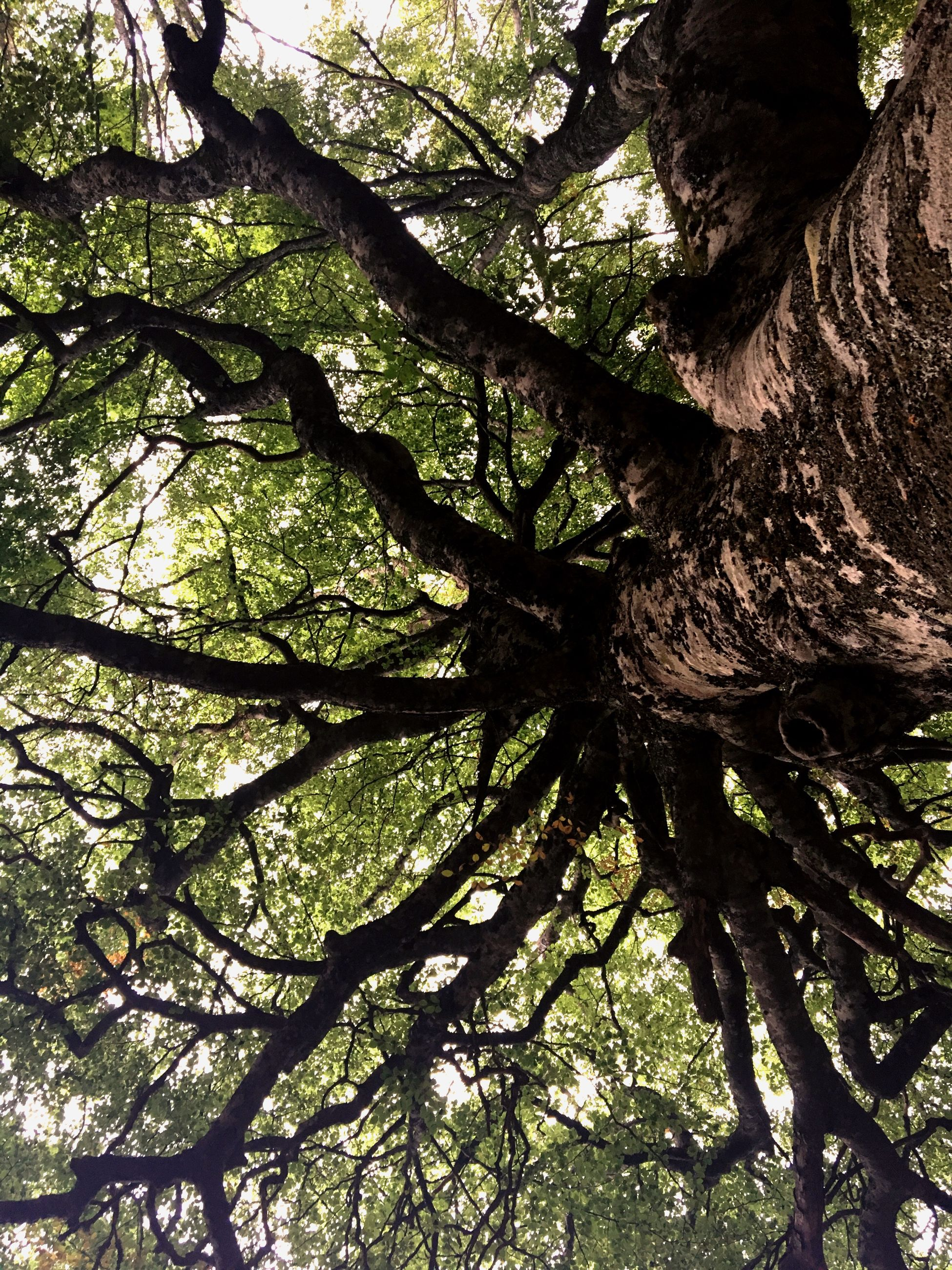 tree, tree trunk, branch, nature, growth, no people, day, low angle view, outdoors, tranquility, beauty in nature, sunlight, close-up, sky