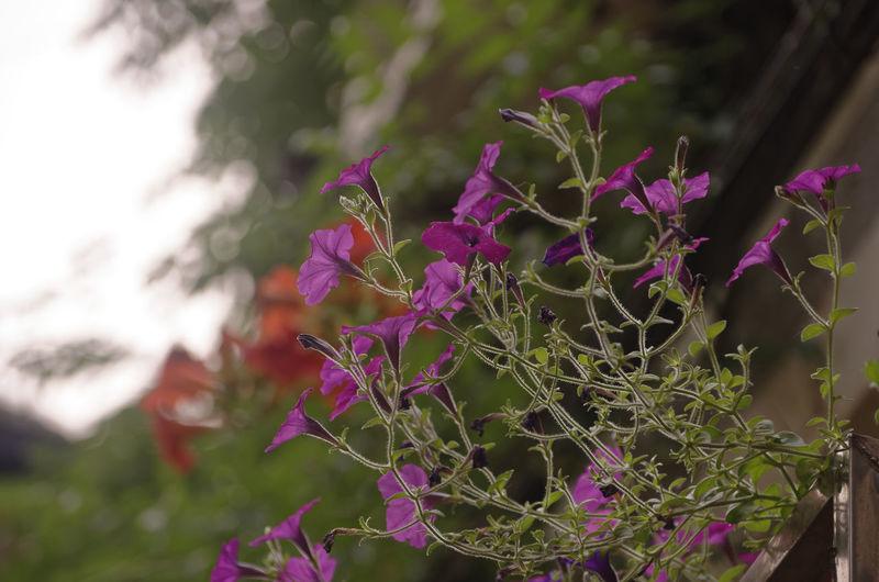 花 夏天 Nature Pink Color Flower No People Beauty In Nature