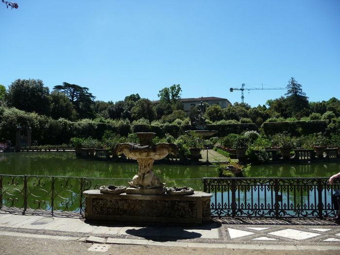 Botanical Garden Clear Sky Day Giardino Di Boboli Nature Outdoors Tree Water