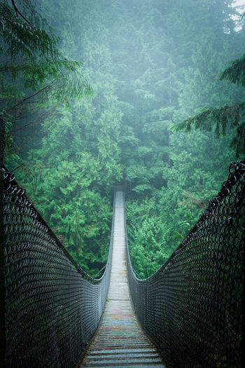 Empty Footbridge Amidst Trees At Forest