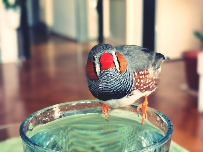 Close-up of a bird in glass