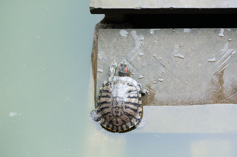 High Angle View Of Turtle On Jetty Over Lake