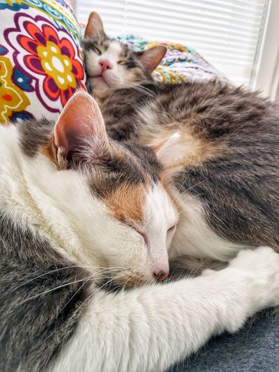 Close-Up Of Cats Sleeping On Pillows