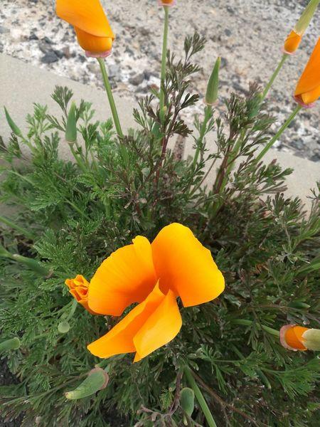flor silvestre Flower Head Flower Yellow Orange Color Close-up Plant
