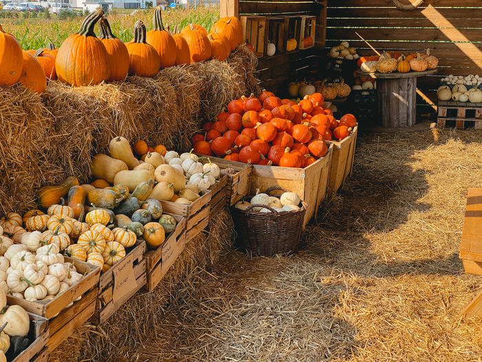 View of pumpkins for sale at market stall