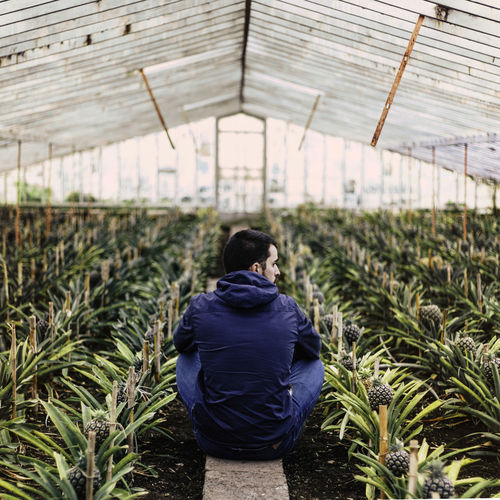 Rear View Of Young Man Sitting Amidst Plants In Greenhouse