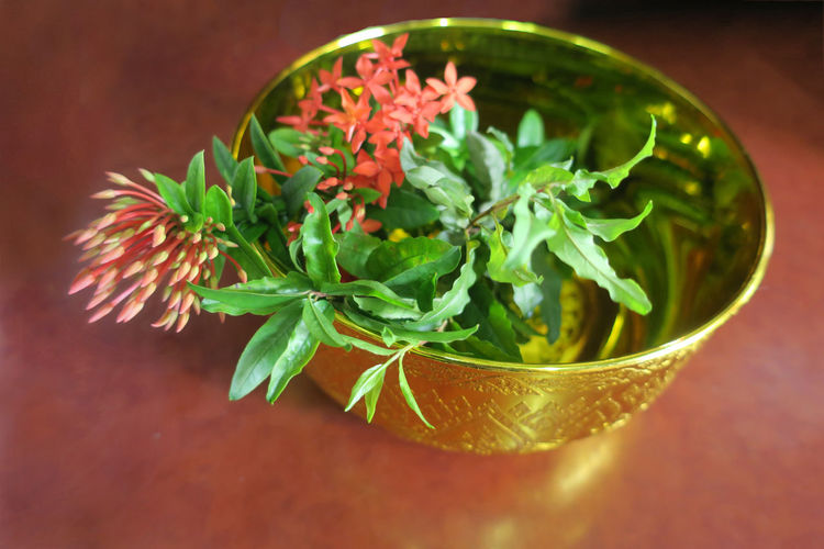 Tradition Ceremony Close-up Day Flower Freshness Felicitous Gold Color Green Color High Angle View Ideology Indoors  Leaf Nature No People Plant Table Water Bowl