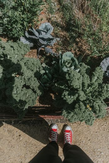 Eat your greens Human Leg Personal Perspective Low Section Standing Shoe Plant Nature Kale Healthy Food Health Eat Your Veggies Veggies Vegetables Garden Photography
