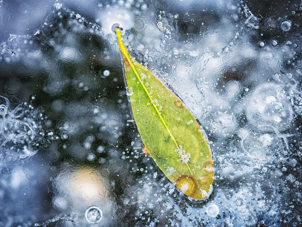 The frozen leaf. Beauty In Nature Close-up Drop Fragility Freshness Frozen Frozen Water Ice Leaf Leaves Macro Nature No People Outdoors RainDrop