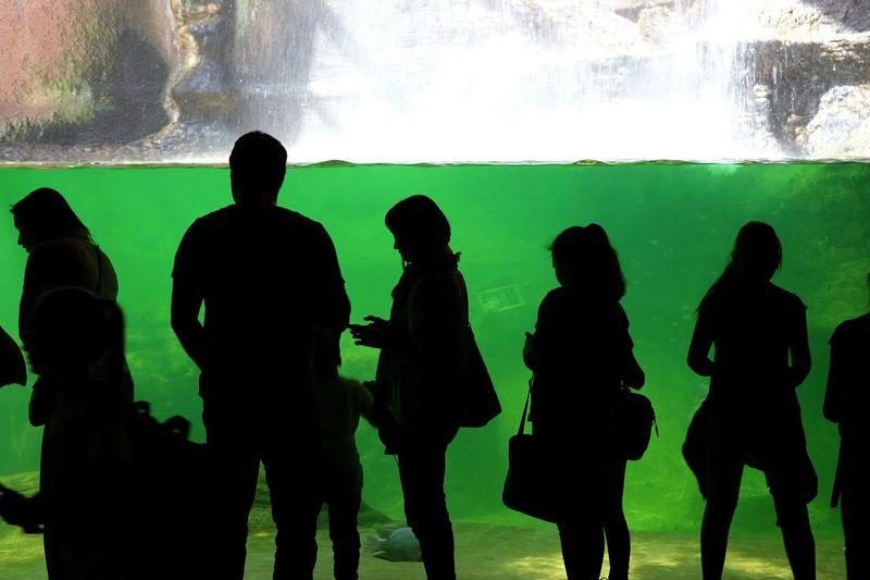 Aquarium Silhouette Water People Watching Green via Fotofall