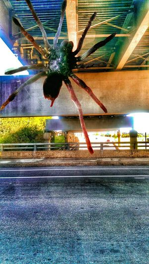 The Impurist Capture The Moment Arachnipocalypse Under The Bridge Downtown Show-me-state Of Mind Drivebyphotography EyeEm Animal Lover Sunlight And Shadow Musical Photos https://youtu.be/lwlogyj7nFE