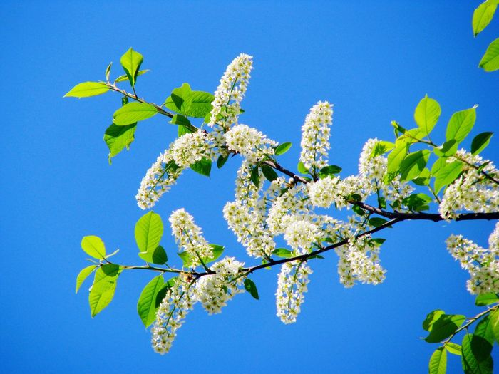 Low Angle View Of Flowers Blooming Against Clear Blue Sky