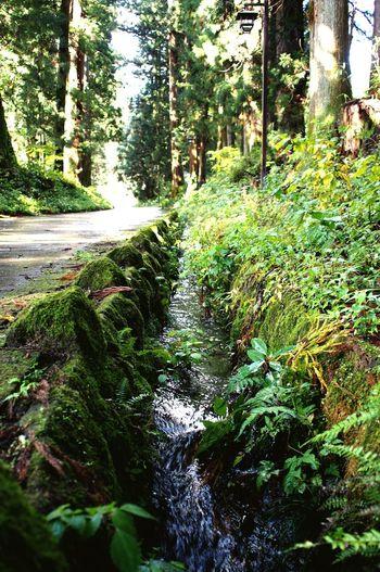 Nikko 日光 杉並木街道 Nature Photography Nature Japan EyeEm EyeEm Gallery Japan Photography