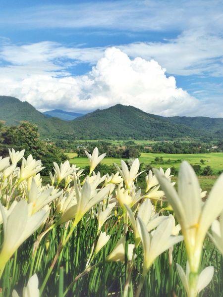 Nature Thailand_allshots EyeEm Nature Lover Landscape flower