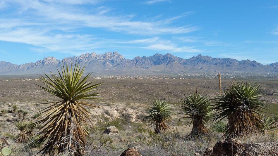 New Mexico Las Cruces Sky Organ Mountains