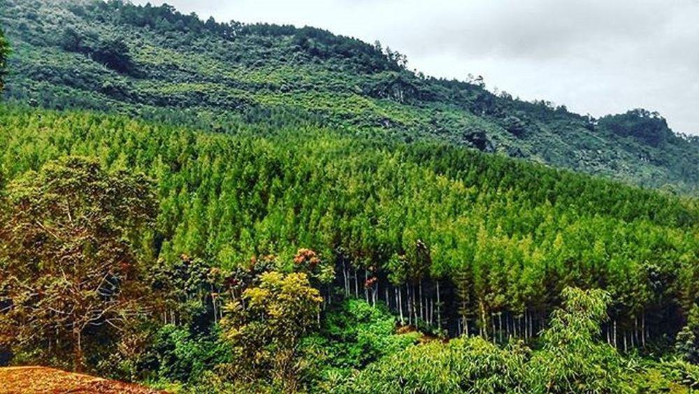 Bersihkan pandangan kembali, dgn memandangi lukisan sang pencipta Wisatatrekking Maribaya Bandungbarat Pineforest Dheayodiansyah Jalandihutan Lembang