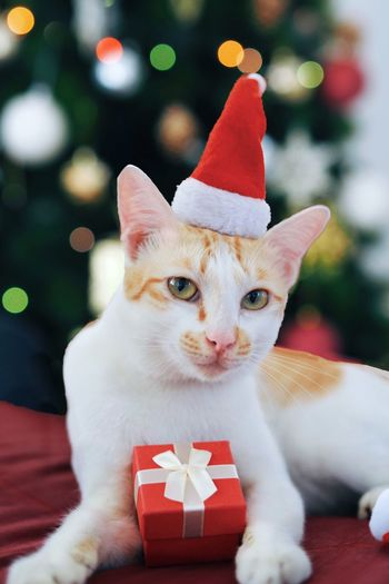 Close-up portrait of cat wearing santa hat while sitting against christmas tree