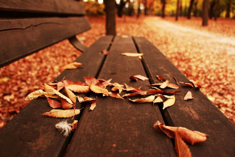 Autumn Leaf Change Dry Nature Leaves Fallen