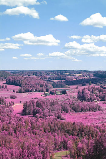 Cloud - Sky Beauty In Nature Sky Tranquil Scene Environment Scenics - Nature Tranquility Plant Landscape Nature Pink Color Day No People Non-urban Scene Land Tree Flower Growth Flowering Plant Idyllic Purple Infrared Photography