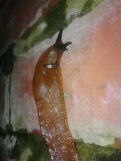 Animal Snail