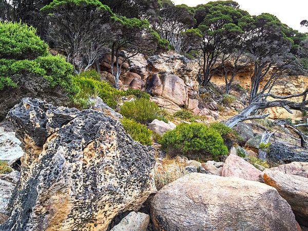 Bunker Bay Cliffs Nature Ocean Cliffs Cliffside Rock Cliffs Western Australia Coastal Rock Rock Formation Bunker Bay Indian Ocean Australia Secluded Beach Coast Line  Travel Trees Tourism Coastal Australia & Travel
