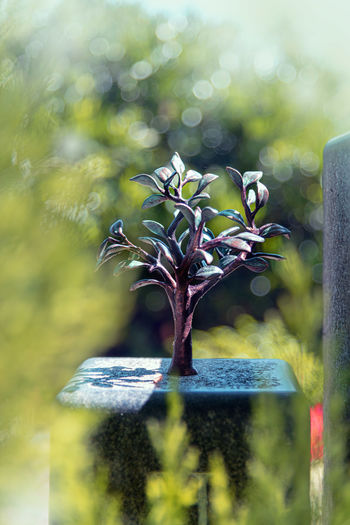 Plant Growth Selective Focus Nature No People Day Beauty In Nature Flower Flowering Plant Grave Cemetery Close-up Outdoors Sunlight Tombstone Tree Religion Plant Part Leaf