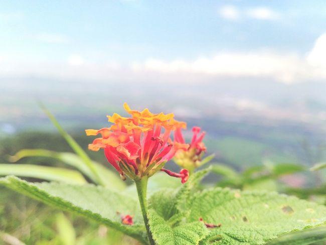 Beutifuel Flower and You Enjoying Life Hello World First Eyeem Photo