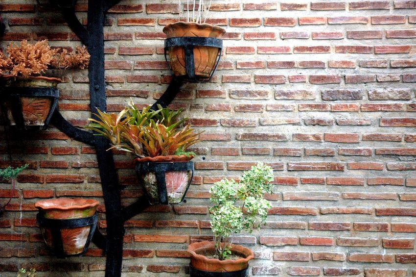 Architecture Brick Wall Building Exterior Built Structure Day Eyeem Philippines Eyeem Philippines Album Flower Ivy Nature No People Outdoors Plant Travel Travel Destinations Travel Photography Wall - Building Feature Window Box