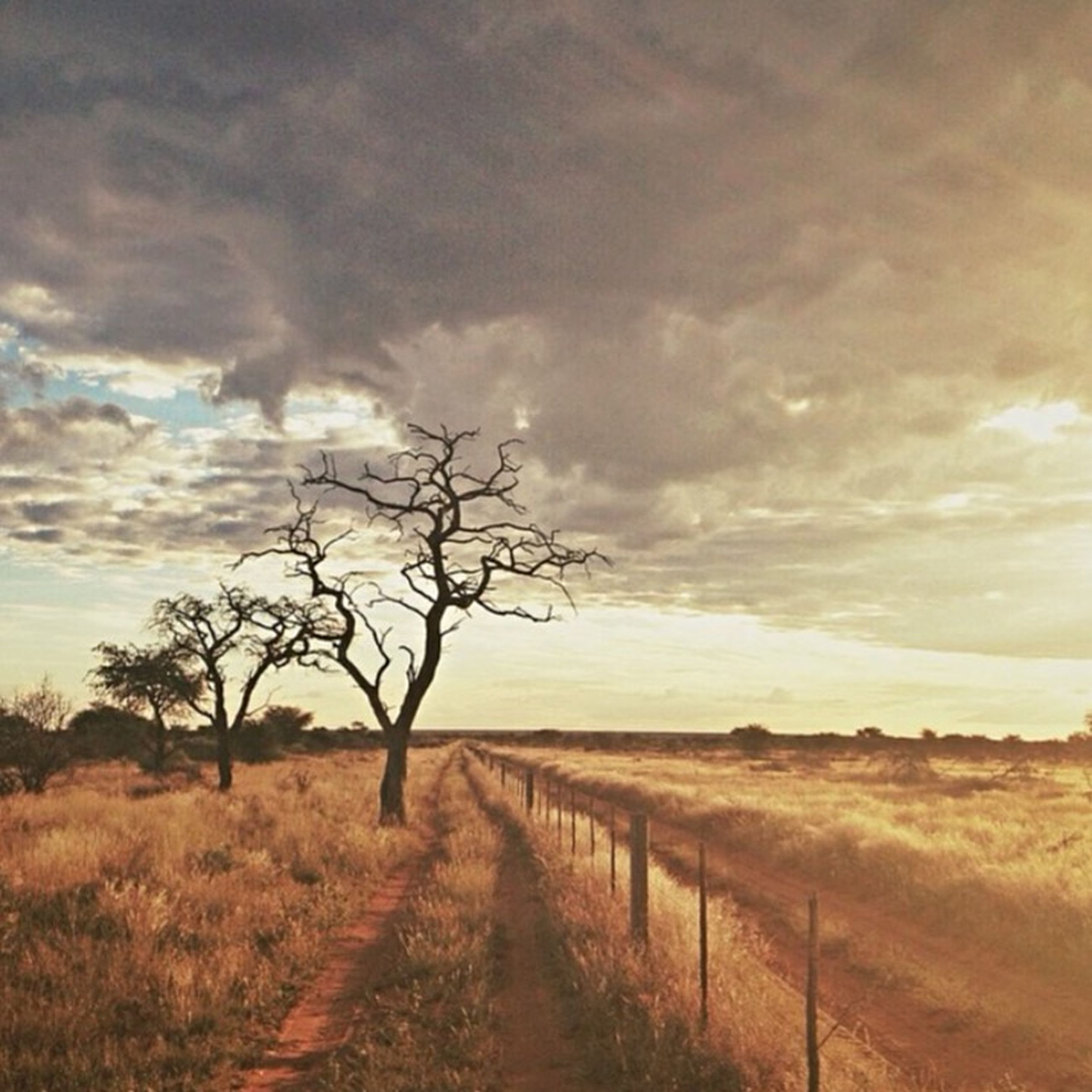 tranquility, tranquil scene, sky, bare tree, the way forward, scenics, landscape, beauty in nature, nature, cloud - sky, grass, field, sunset, tree, dirt road, cloud, non-urban scene, water, cloudy, idyllic