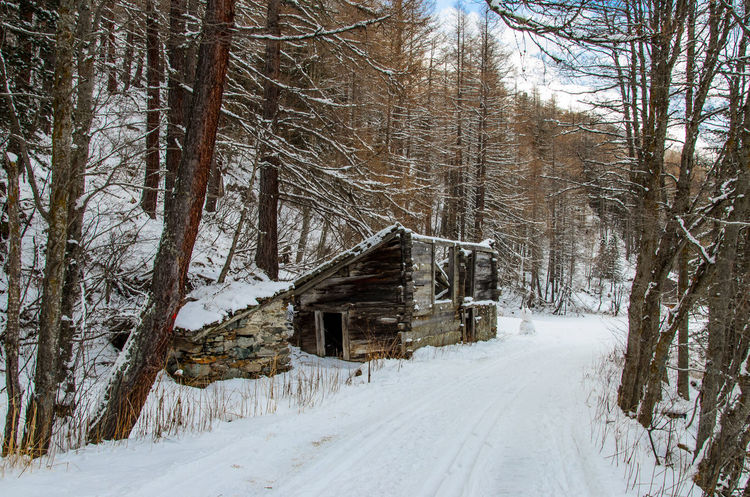 Abandoned Architecture Bare Tree Building Exterior Built Structure Cabin Cabin In The Woods Cold Cold Temperature Composition Covering Field House Outdoors Perspective Season  Snow The Way Forward Transient Tree Weather Winter Wood First Eyeem Photo