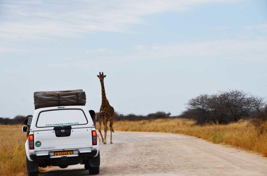 Adventure Animal Encounters Arid Climate Desert Escapism Etosha Giraffe Landscape Namibia Outdoors Remote Roadtrip Safari