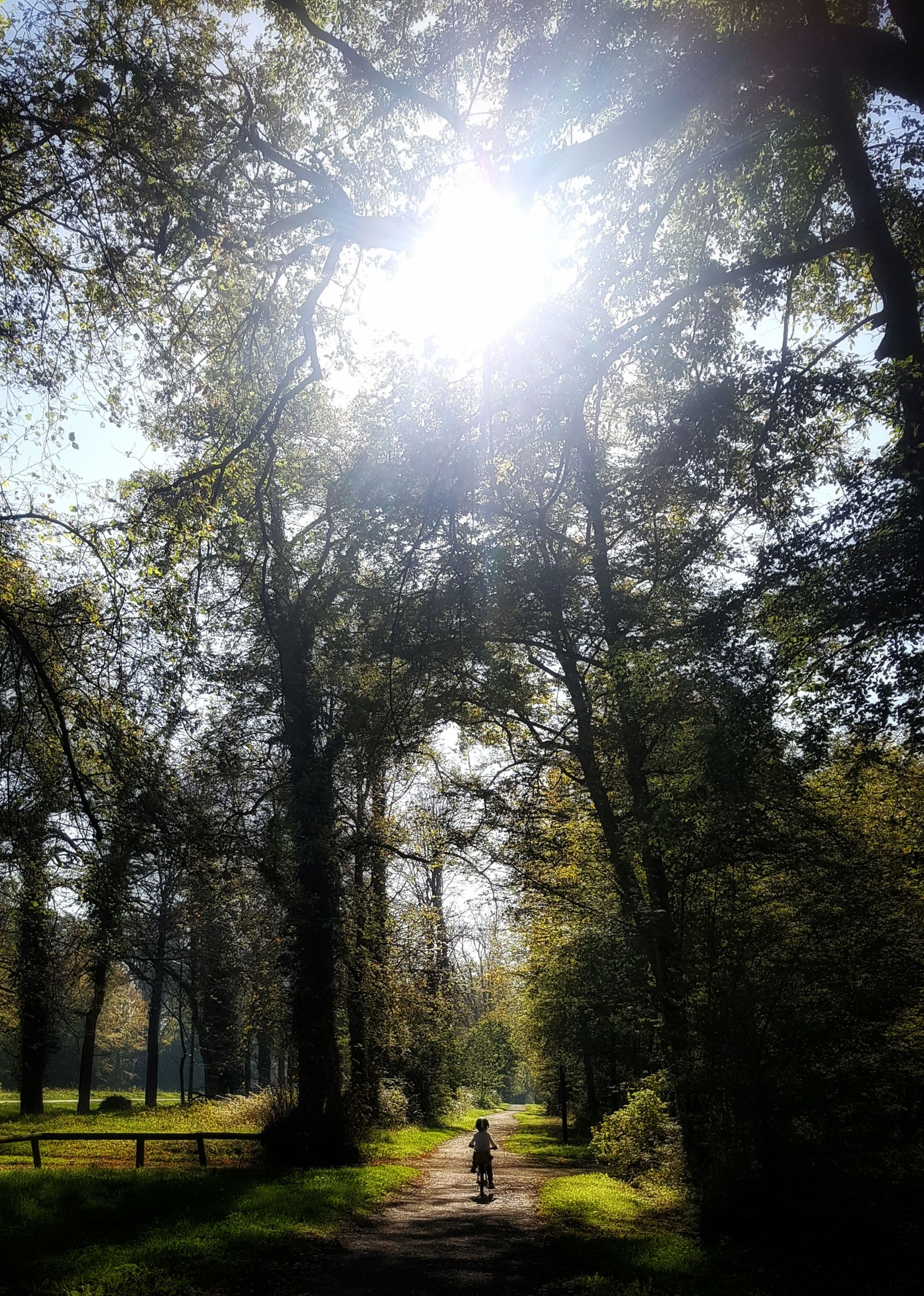 tree, sunbeam, nature, tranquility, day, sunlight, growth, tranquil scene, the way forward, forest, walking, beauty in nature, scenics, tree trunk, outdoors, real people, full length, branch, landscape, one person, sky, people