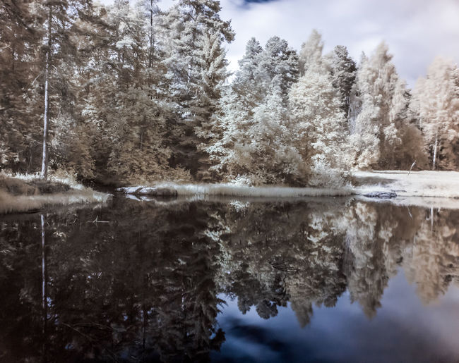 Trees by lake in forest during winter